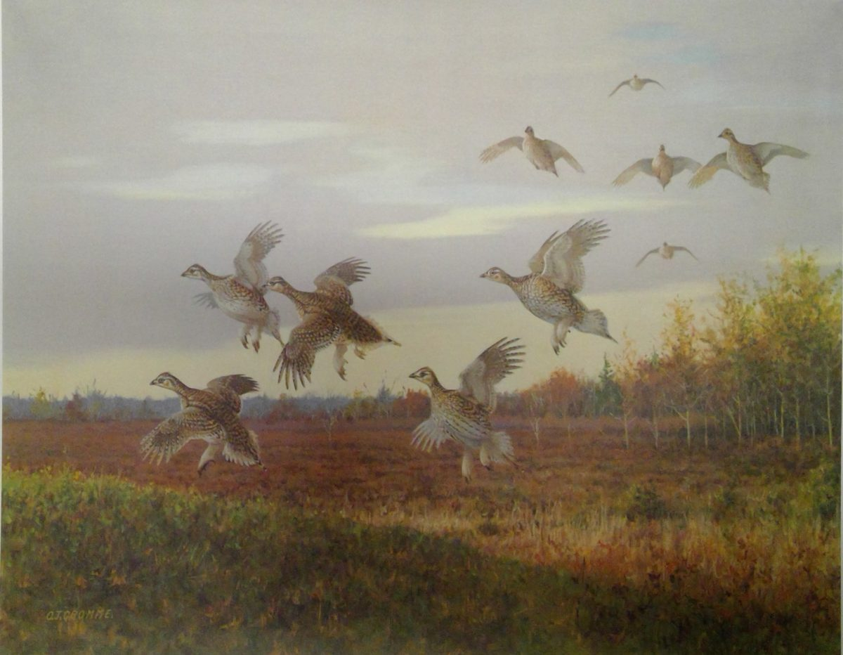 Late Day Prairie Chickens
